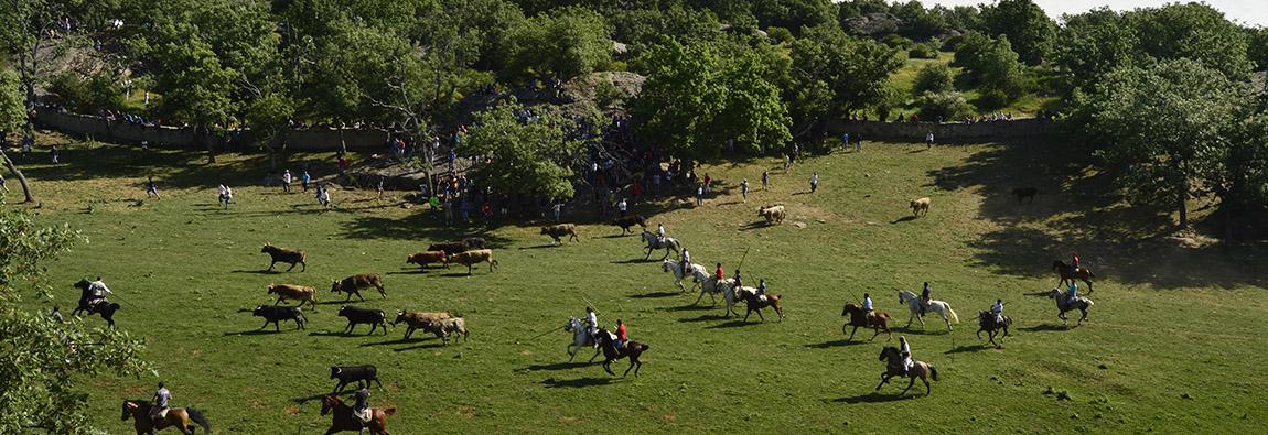Monte Valonsadero – Turismo Soria
