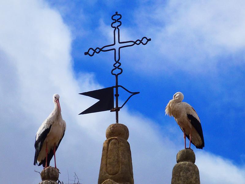 La veleta del campanario y una pareja de cigüeñas