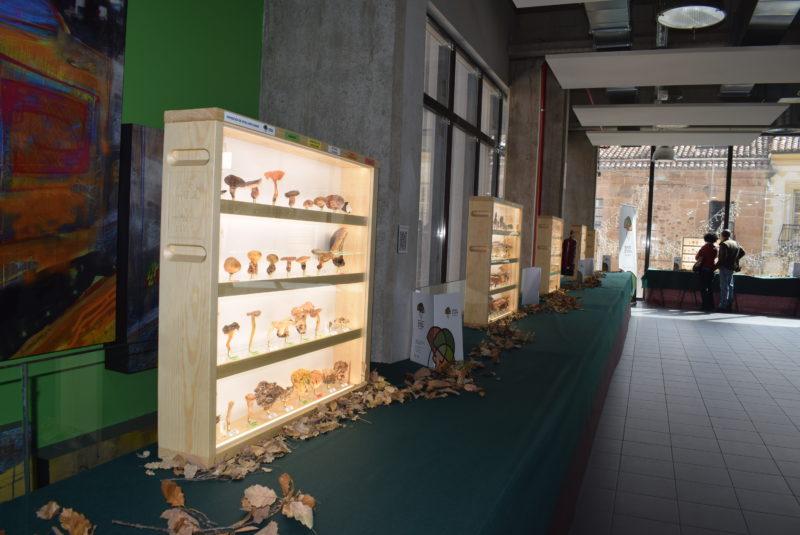 El mercado municipal acoge una exposición con más de 400 ejemplares de setas liofilizadas